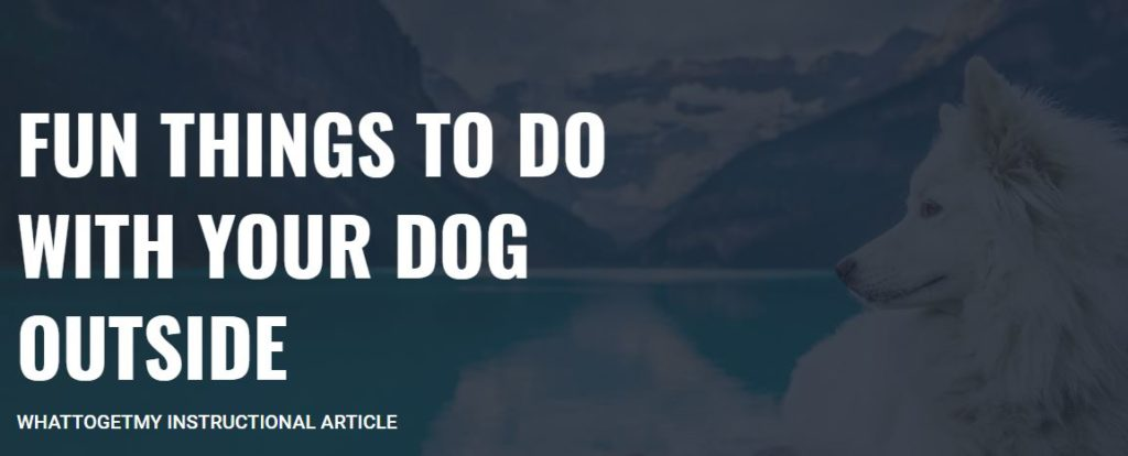 FUN THINGS TO DO WITH YOUR DOG OUTSIDE
