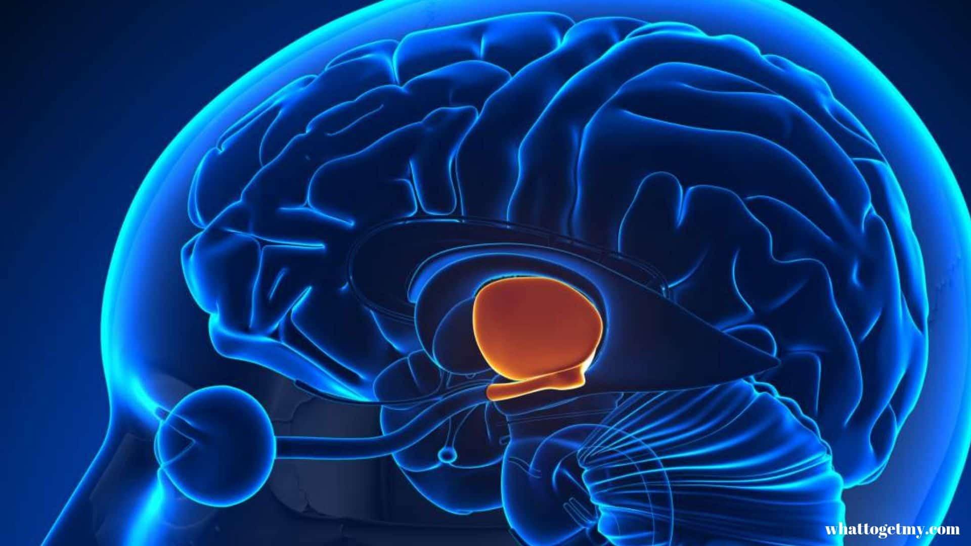 All Starts in the Hypothalamus