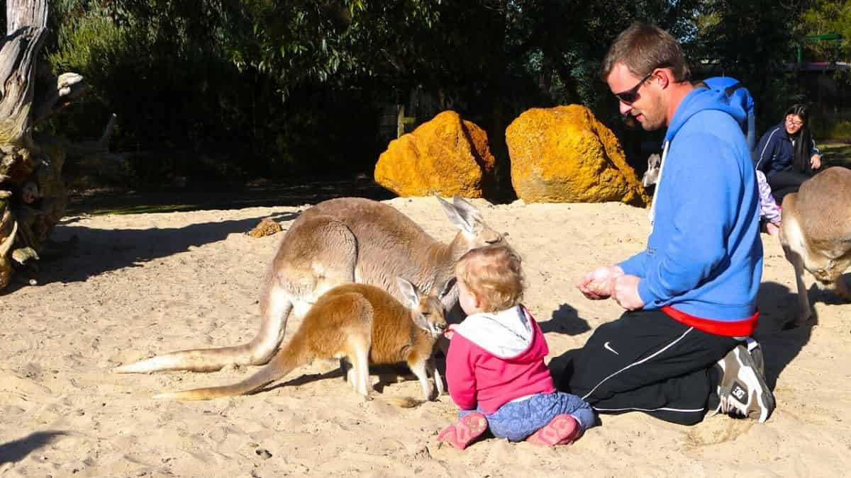 Visit to A Petting Zoo with child