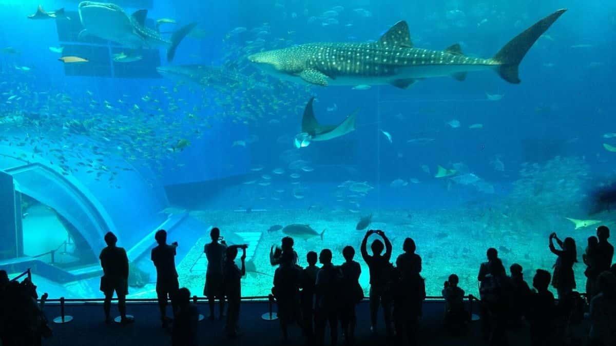 visit to an Aquarium with child