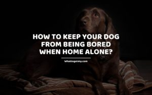 How to Keep Your Dog from Being Bored When Home Alone