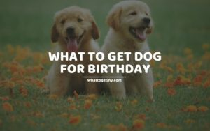WHAT TO GET DOG FOR BIRTHDAY